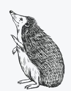 Bild eines Igels